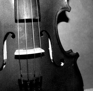 Violin #2